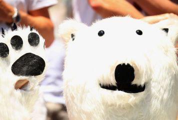 可愛らしい白クマがコンフェデ杯の勝敗予想!? ホッキョクグマの公式予言師「ニカ」が話題に