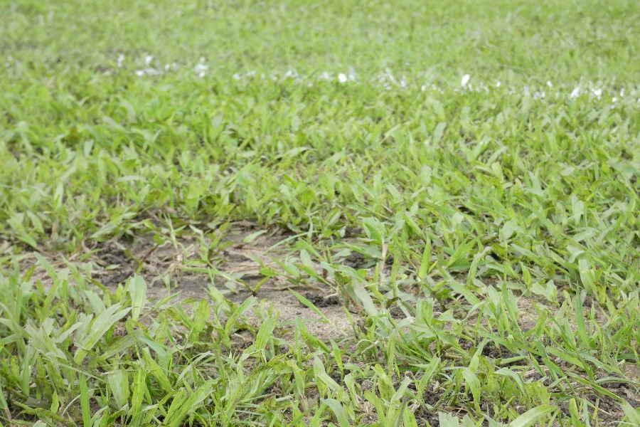 練習場の芝生はスコール前はしっかりしていた【写真:Football ZONE web】